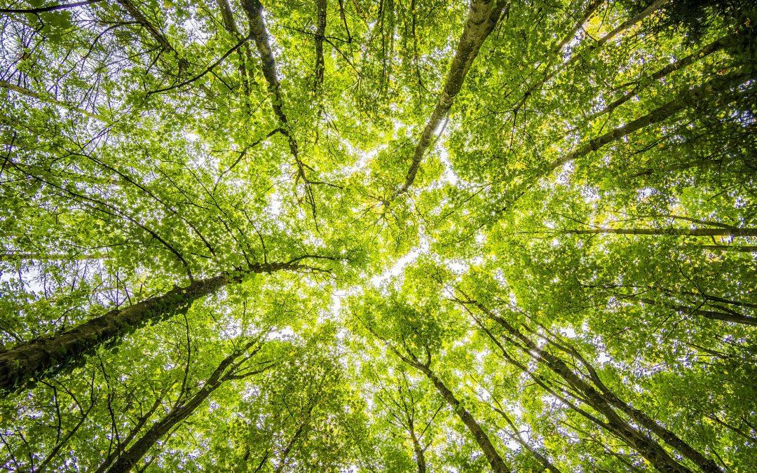 Love Thy Nature – A Virtual Workshop