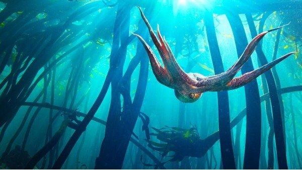 Octopus2-imdb600x338